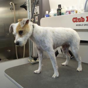 JRT After stripping