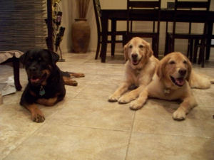 Lauren's 3 dogs Waiting for their dinner