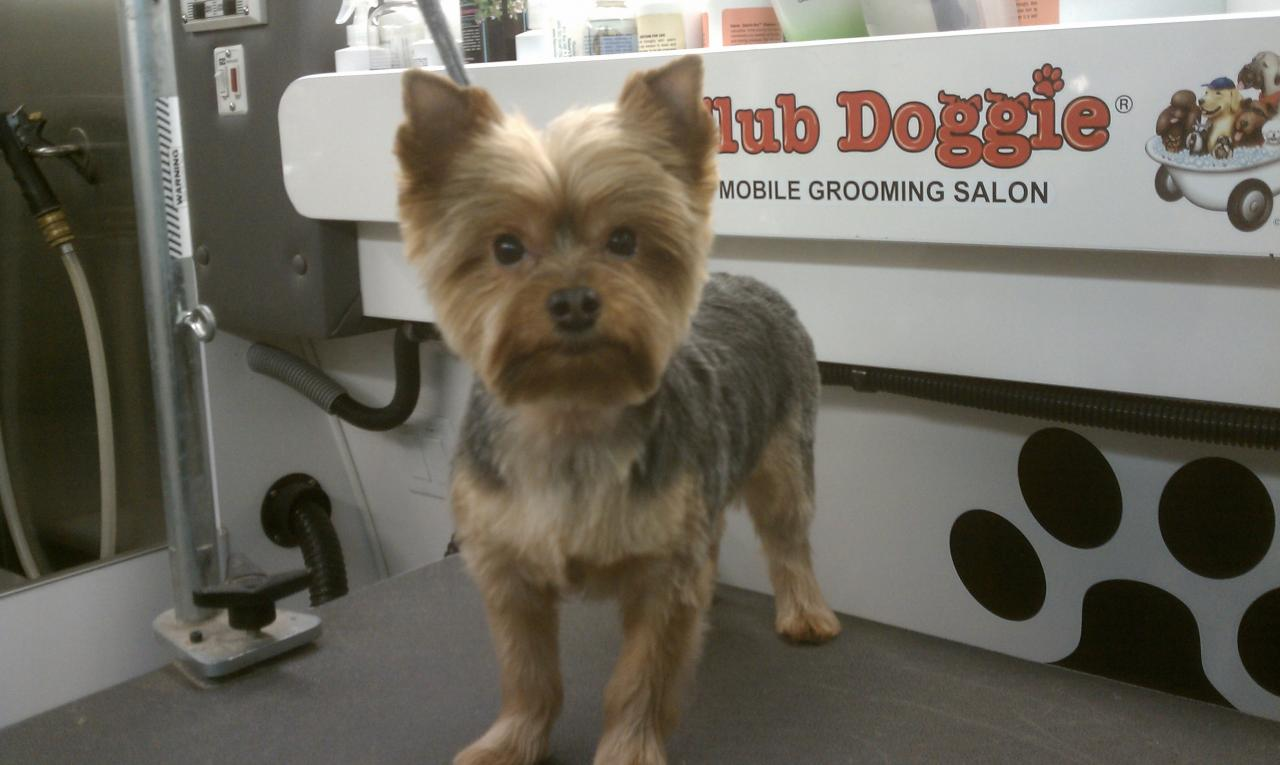 Club Doggie Mobile Grooming Salon Photo Gallery